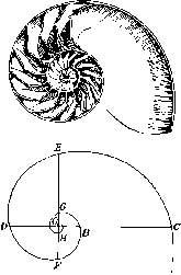 helende-reis-schelp